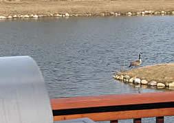 eastern refinishing geese